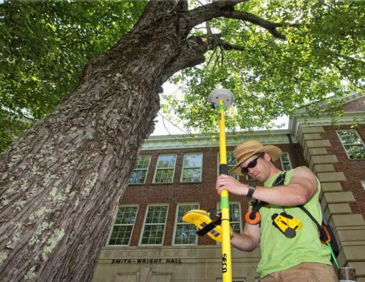 Arborist Consultations-Valrico FL Tree Trimming and Stump Grinding Services-We Offer Tree Trimming Services, Tree Removal, Tree Pruning, Tree Cutting, Residential and Commercial Tree Trimming Services, Storm Damage, Emergency Tree Removal, Land Clearing, Tree Companies, Tree Care Service, Stump Grinding, and we're the Best Tree Trimming Company Near You Guaranteed!