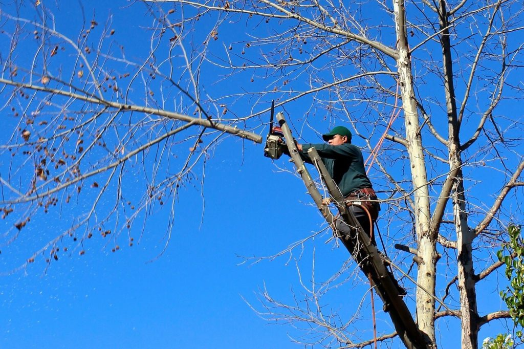 Contact Us-Valrico FL Tree Trimming and Stump Grinding Services-We Offer Tree Trimming Services, Tree Removal, Tree Pruning, Tree Cutting, Residential and Commercial Tree Trimming Services, Storm Damage, Emergency Tree Removal, Land Clearing, Tree Companies, Tree Care Service, Stump Grinding, and we're the Best Tree Trimming Company Near You Guaranteed!
