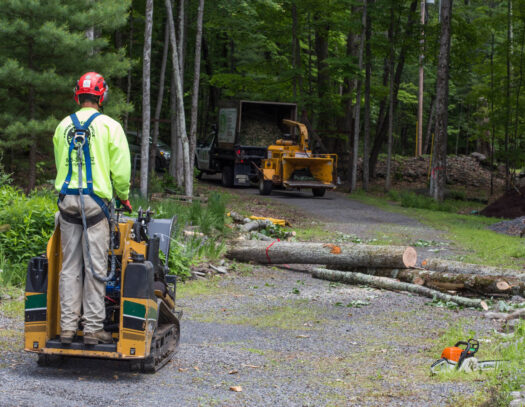 Emergency Tree Removal-Valrico FL Tree Trimming and Stump Grinding Services-We Offer Tree Trimming Services, Tree Removal, Tree Pruning, Tree Cutting, Residential and Commercial Tree Trimming Services, Storm Damage, Emergency Tree Removal, Land Clearing, Tree Companies, Tree Care Service, Stump Grinding, and we're the Best Tree Trimming Company Near You Guaranteed!