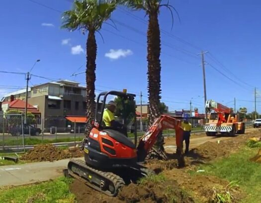 Palm Tree Removal-Valrico FL Tree Trimming and Stump Grinding Services-We Offer Tree Trimming Services, Tree Removal, Tree Pruning, Tree Cutting, Residential and Commercial Tree Trimming Services, Storm Damage, Emergency Tree Removal, Land Clearing, Tree Companies, Tree Care Service, Stump Grinding, and we're the Best Tree Trimming Company Near You Guaranteed!