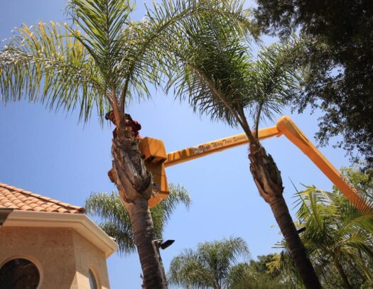 Palm Tree Trimming-Valrico FL Tree Trimming and Stump Grinding Services-We Offer Tree Trimming Services, Tree Removal, Tree Pruning, Tree Cutting, Residential and Commercial Tree Trimming Services, Storm Damage, Emergency Tree Removal, Land Clearing, Tree Companies, Tree Care Service, Stump Grinding, and we're the Best Tree Trimming Company Near You Guaranteed!