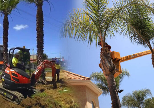 Palm tree trimming & palm tree removal-Valrico FL Tree Trimming and Stump Grinding Services-We Offer Tree Trimming Services, Tree Removal, Tree Pruning, Tree Cutting, Residential and Commercial Tree Trimming Services, Storm Damage, Emergency Tree Removal, Land Clearing, Tree Companies, Tree Care Service, Stump Grinding, and we're the Best Tree Trimming Company Near You Guaranteed!