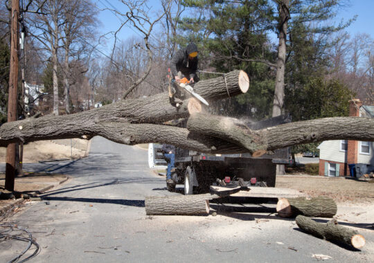 Residential Tree Services-Valrico FL Tree Trimming and Stump Grinding Services-We Offer Tree Trimming Services, Tree Removal, Tree Pruning, Tree Cutting, Residential and Commercial Tree Trimming Services, Storm Damage, Emergency Tree Removal, Land Clearing, Tree Companies, Tree Care Service, Stump Grinding, and we're the Best Tree Trimming Company Near You Guaranteed!