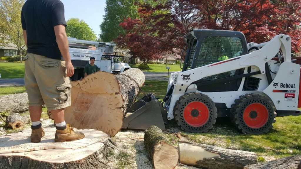Services-Valrico FL Tree Trimming and Stump Grinding Services-We Offer Tree Trimming Services, Tree Removal, Tree Pruning, Tree Cutting, Residential and Commercial Tree Trimming Services, Storm Damage, Emergency Tree Removal, Land Clearing, Tree Companies, Tree Care Service, Stump Grinding, and we're the Best Tree Trimming Company Near You Guaranteed!