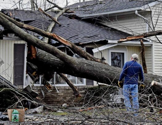 Storm Damage-Valrico FL Tree Trimming and Stump Grinding Services-We Offer Tree Trimming Services, Tree Removal, Tree Pruning, Tree Cutting, Residential and Commercial Tree Trimming Services, Storm Damage, Emergency Tree Removal, Land Clearing, Tree Companies, Tree Care Service, Stump Grinding, and we're the Best Tree Trimming Company Near You Guaranteed!
