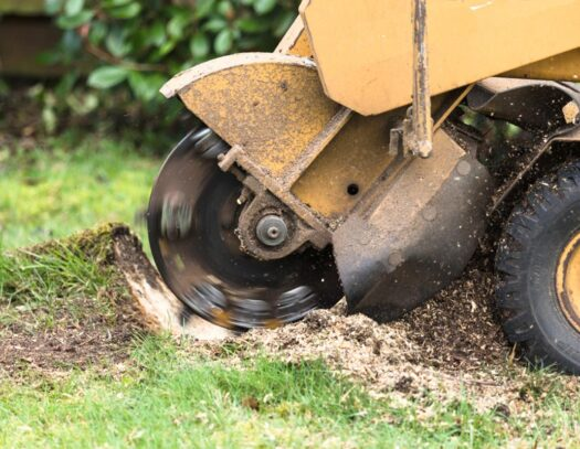 Stump Grinding-Valrico FL Tree Trimming and Stump Grinding Services-We Offer Tree Trimming Services, Tree Removal, Tree Pruning, Tree Cutting, Residential and Commercial Tree Trimming Services, Storm Damage, Emergency Tree Removal, Land Clearing, Tree Companies, Tree Care Service, Stump Grinding, and we're the Best Tree Trimming Company Near You Guaranteed!