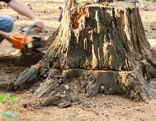 Stump Removal-Valrico FL Tree Trimming and Stump Grinding Services-We Offer Tree Trimming Services, Tree Removal, Tree Pruning, Tree Cutting, Residential and Commercial Tree Trimming Services, Storm Damage, Emergency Tree Removal, Land Clearing, Tree Companies, Tree Care Service, Stump Grinding, and we're the Best Tree Trimming Company Near You Guaranteed!
