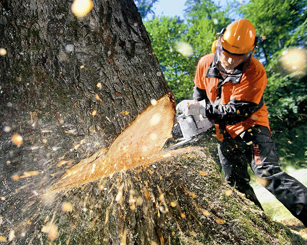 Tree Cutting-Valrico FL Tree Trimming and Stump Grinding Services-We Offer Tree Trimming Services, Tree Removal, Tree Pruning, Tree Cutting, Residential and Commercial Tree Trimming Services, Storm Damage, Emergency Tree Removal, Land Clearing, Tree Companies, Tree Care Service, Stump Grinding, and we're the Best Tree Trimming Company Near You Guaranteed!