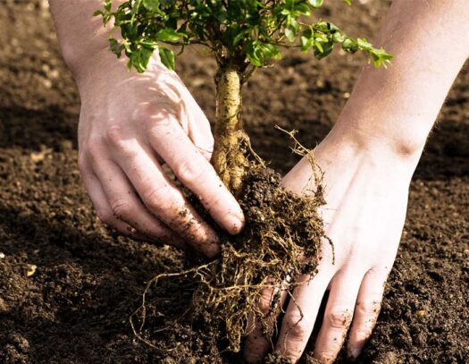 Tree Planting-Valrico FL Tree Trimming and Stump Grinding Services-We Offer Tree Trimming Services, Tree Removal, Tree Pruning, Tree Cutting, Residential and Commercial Tree Trimming Services, Storm Damage, Emergency Tree Removal, Land Clearing, Tree Companies, Tree Care Service, Stump Grinding, and we're the Best Tree Trimming Company Near You Guaranteed!