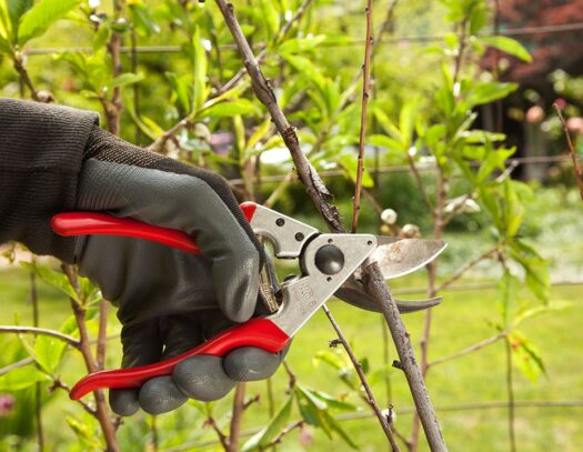 Tree Pruning-Valrico FL Tree Trimming and Stump Grinding Services-We Offer Tree Trimming Services, Tree Removal, Tree Pruning, Tree Cutting, Residential and Commercial Tree Trimming Services, Storm Damage, Emergency Tree Removal, Land Clearing, Tree Companies, Tree Care Service, Stump Grinding, and we're the Best Tree Trimming Company Near You Guaranteed!
