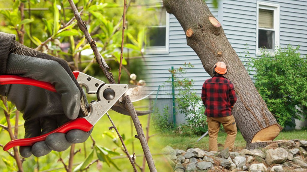 Tree pruning & tree removal-Valrico FL Tree Trimming and Stump Grinding Services-We Offer Tree Trimming Services, Tree Removal, Tree Pruning, Tree Cutting, Residential and Commercial Tree Trimming Services, Storm Damage, Emergency Tree Removal, Land Clearing, Tree Companies, Tree Care Service, Stump Grinding, and we're the Best Tree Trimming Company Near You Guaranteed!