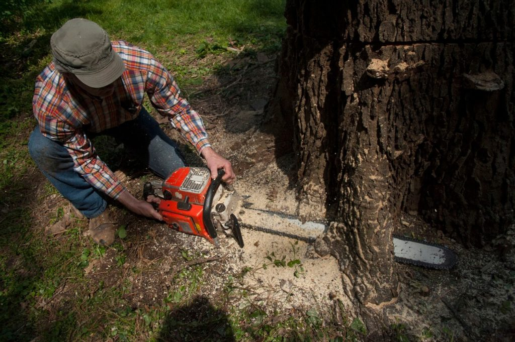 Valrico FL Tree Trimming and Stump Grinding Services Home Page-We Offer Tree Trimming Services, Tree Removal, Tree Pruning, Tree Cutting, Residential and Commercial Tree Trimming Services, Storm Damage, Emergency Tree Removal, Land Clearing, Tree Companies, Tree Care Service, Stump Grinding, and we're the Best Tree Trimming Company Near You Guaranteed!